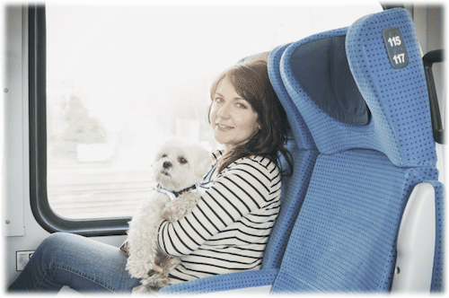 Therapy Dog or Emotional Support Dog on Bus Airplane Fly Travel Free